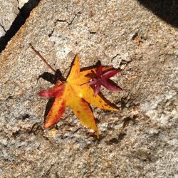 Leaves on Rock